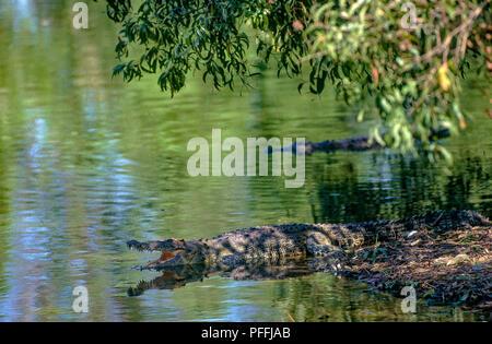 Australia Nothern Territory Darwin  Kakadu National Park - Crocodile - Stock Photo