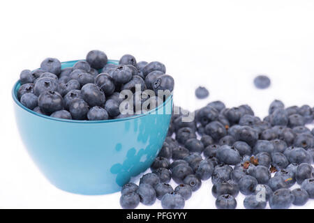 Blueberries isolated on a white background - Stock Photo