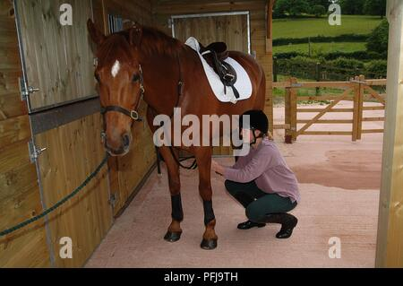 Young woman tacking up horse in stable - Stock Photo