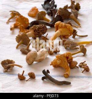 Freshly picked mushrooms, including chanterelle, cep, morel and horn of plenty, on a cloth - Stock Photo