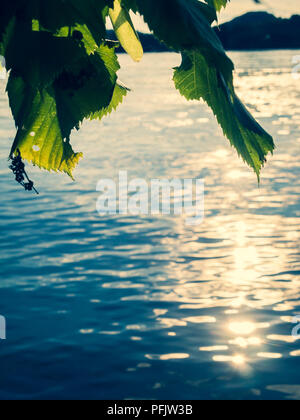 Close Up of Leaves Over A Lake - Stock Photo