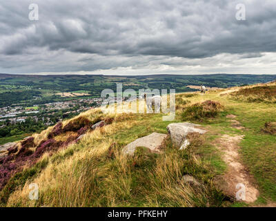 Sheep overlooking Wharfedale from Ilkley Crags on Ilkley Moor West Yorkshire England - Stock Photo