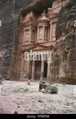 Al-Khazneh, meaning the Treasury in Arabic, carved out of solid rock and standing over 40m high, in the Nabatean city of Petra, near the town of Wadi Mousa in southern Jordan, donkey lying down in foreground. - Stock Photo
