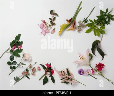 Pink, red, purple and white flowers and green leaves on stem cuttings - Stock Photo