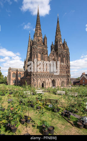 Lichfield Cathedral Staffordshire England with 1918 trees forming a Peace Woodland as part of a Great Exhibition, Imagine Peace, to celebrate the centenary of 1918 created by artist in residence Peter Walker from 17th August 2018 to 27th August 2018.  After the Exhibition the trees will be planted in Beacon Park Lichfield. - Stock Photo
