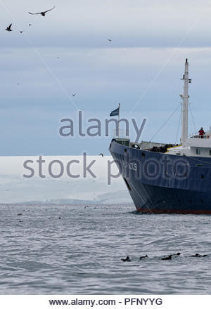 Cruise ship with birds near Alkefjellet, Hinlopenstretet, Svalbard, Norway - Stock Photo