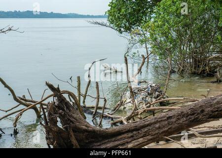 Singapore - July 15, 2018: Plastic pollution in Johor Strait - Stock Photo