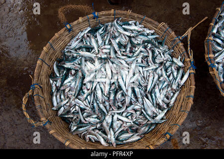 Sri Lanka, Western Province, Negombo, fish for sale in market, overhead view - Stock Photo