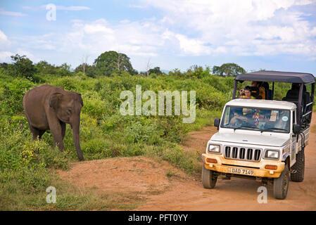 Horizontal view of an elephant near a jeep on safari at Udawalawe National Park in Sri Lanka. - Stock Photo