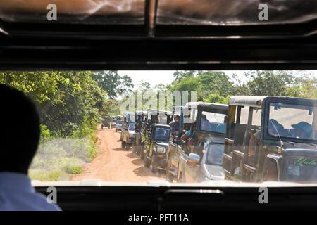 Horizontal view of a traffic jam of safari jeeps in Yala National Park, Sri Lanka. - Stock Photo