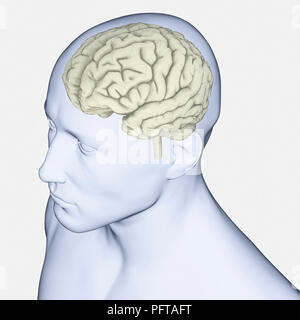 Digital illustration of human brain - Stock Photo