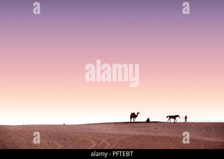 Colorful minimalist landscape of the Sahara desert with silhouettes of camel, horse and man over pink and purple sunset sky, Egypt, Africa - Stock Photo