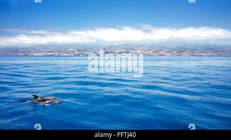 Dolphins in the sea with a island landscape. blue water. dolpins - Stock Photo