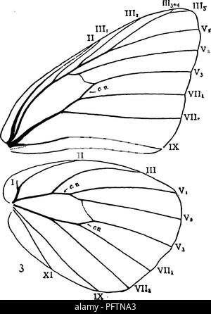 . A manual for the study of insects. Insects. LEPIDOPTERA, 381 Family PiERlD^ (Pi-er'i-dae). The Pierids {Pi'e-rids). These butterflies are usually of medium size, but some of them are small; they are nearly always white, yellow, or orange, and are usually marked with black. They are the most abundant of all our butterflies, being common every- where in fields and roads. Some species are so abundant as to be serious pests, the larvae feeding on cultivated plants. The characteristic features of the venation of the wines are the following (Fig. 460): Vein V^ of the fore wings is more closely con - Stock Photo