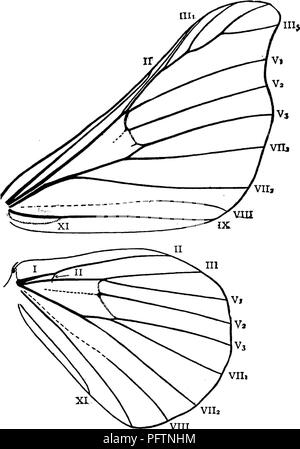 . A manual for the study of insects. Insects. LEPIDOPTERA, 341 wings and sometimes a faint double bar at the end of the discal cell. The head is small; the antennae are pectinated broadly in both sexes; and the ocelli, palpi, and maxillae are wanting. The abdomen and thorax are densely clothed with woolly hair. The distinctive feature in the venation of the wings (Fig. 419) is the obvious presence of vein I on the hind wings. The usual food of the Silk-worm is the leaf of the mul- berry. Our native species, however, are not suitable. The species that are most used are the white mulberry {Morus - Stock Photo