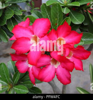 The pink flower blooming - Stock Photo