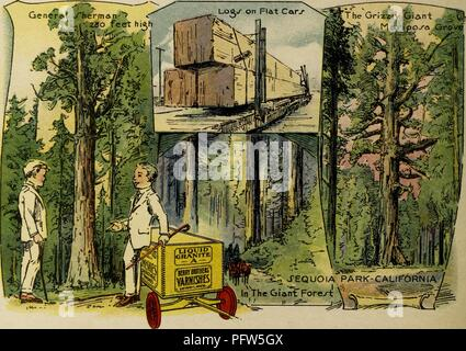 Color illustration depicting several images of California's Sequoia Park, including 'General Sherman, ' 'The Grizzly Giant, ' the 'Mariposa Grove, ' and felled 'Logs on Flat Cars' being carted away, along with the eponymous characters, wearing white suits and standing near a wagon advertising 'Berry Brothers Varnishes, ' from the children's volume 'Seeing America First: with the Berry Brothers, ' authored by Eleanor Colby, and illustrated by FW Pfeiffer, 1917. Courtesy Internet Archive. () - Stock Photo
