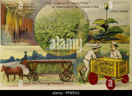 Color illustration depicting several images of 'The Tobacco Industry in Kentucky and Tenessee, ' including a 'Curing Barn, ' a 'Field of Ripe Tobacco, ' a tobacco 'Seed Head' and a 'Frame for Hauling Tobacco, ' along with the eponymous characters, wearing sun hats and standing near a wagon advertising 'Berry Brothers Varnishes, ' from the children's volume 'Seeing America First: with the Berry Brothers, ' authored by Eleanor Colby, and illustrated by FW Pfeiffer, 1917. Courtesy Internet Archive. () - Stock Photo