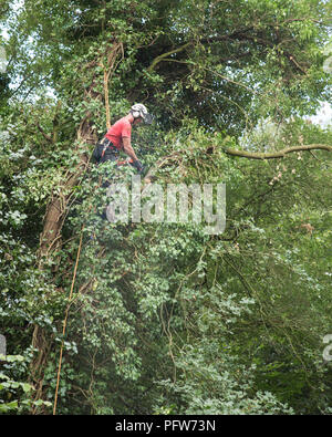 Male Tree Surgeon using a chainsaw high up in a tree. - Stock Photo