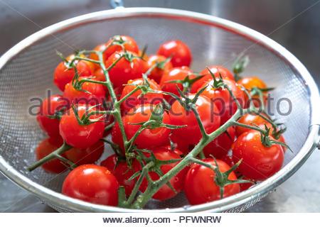 Freshly Washed Tomatoes On Vine - Stock Photo