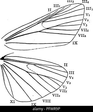 . A manual for the study of insects. Insects. LEPIDOPTERA. 233 1113. The Meal-moth, Pyralis farinalis (Pyr'a-lis far-i-na'lis) is a common species. The larva feeds on jjj^ meal, flour, and old clover-hay. The moth is commonly found near the food of the larva, but is often seen on the ceilings of rooms sitting with its tail curved over its back. It expands about an inch ; the fore wings are light brown, crossed by two curved white lines, and with a dark chocolate-brown spot on the base and tip of each. The Clover-hay Worm, Pyralis costalis (Pyr'a-lis cos-ta'- Hs). The larva of this species some - Stock Photo