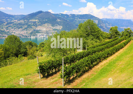 Vineyard on sunny day on lake, Monte Isola, Lombardy, Italy - Stock Photo