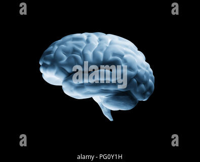 Human Brain 3D model on black background - Stock Photo