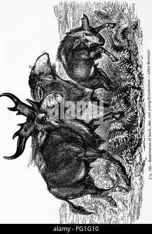 . Zoology : for students and general readers . Zoology. 606 ZOOLOQT.. Please note that these images are extracted from scanned page images that may have been digitally enhanced for readability - coloration and appearance of these illustrations may not perfectly resemble the original work.. Packard, A. S. (Alpheus Spring), 1839-1905. New York : Henry Holt - Stock Photo