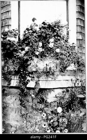 . Manual of gardening : a practical guide to the making of home grounds and the growing of flowers, fruits, and vegetables for home use . Gardening. XX. A simple but effective window-box, containing geraniums, petunias, verbenas, heliotrope, and vines.. Please note that these images are extracted from scanned page images that may have been digitally enhanced for readability - coloration and appearance of these illustrations may not perfectly resemble the original work.. Bailey, L. H. (Liberty Hyde), 1858-1954. New York : Macmillan Co. - Stock Photo