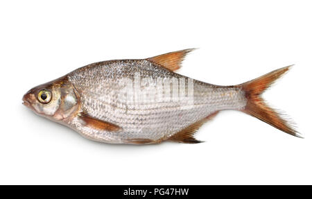Side view of silver bream isolated on white - Stock Photo