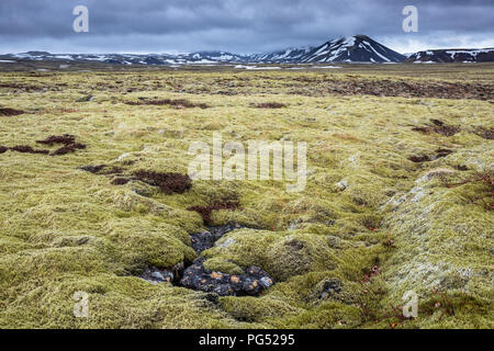Iceland mossy field at cloudy day - Stock Photo