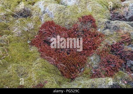 Heart shape moss - Stock Photo