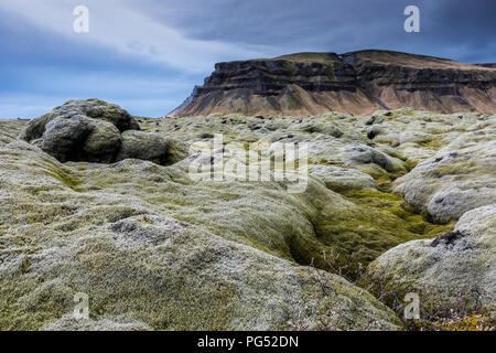 Iceland moss covered lava field at cloudy day - Stock Photo