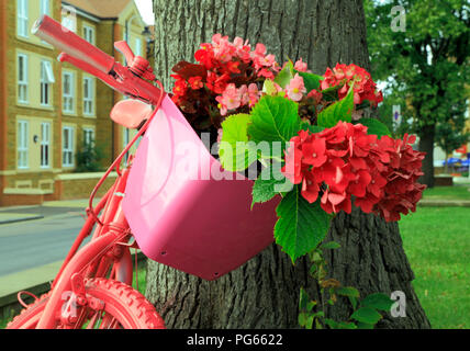 Hunstanton in Bloom, unusual plant container, pink painted bicycle, red, pink hydrangeas, flowers - Stock Photo
