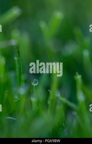 Morning dew on grass - Stock Photo