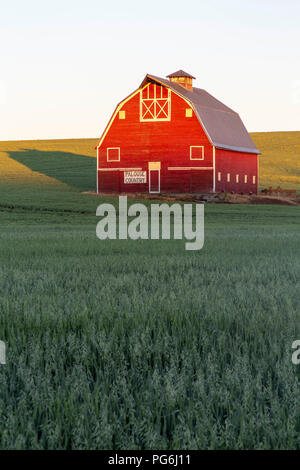 Morning sun lighting up a barn in the Palouse in Washington state near Pullman - Stock Photo