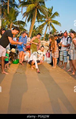 Vertical view of tourists helping to release baby turtles back to the wild in Sri lanka. - Stock Photo