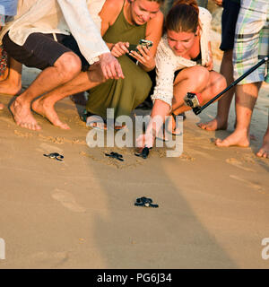 Square close up of tourists helping to release baby turtles back to the wild in Sri lanka. - Stock Photo