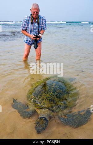 Vertical close up of a Green Turtle being photographed in shallow water. - Stock Photo