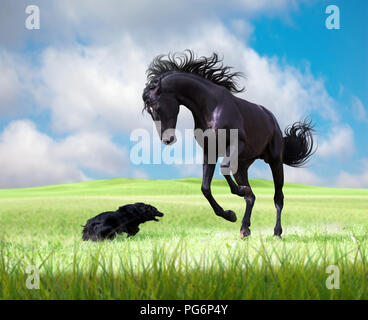 Black horse playing with the black dog on the green grass on the cloudy sky background - Stock Photo