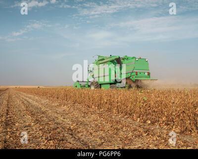 Serbia, Vojvodina, Combine harvester in soybean field - Stock Photo