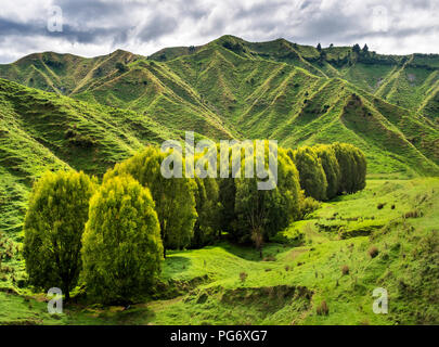 New Zealand, North Island, Manawatu-Wanganui Region, landscape - Stock Photo