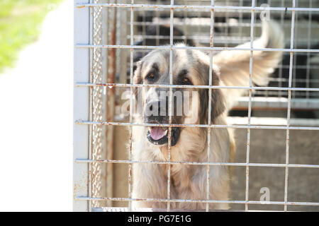Dog in an animal shelter waiting for someone to adopt them. - Stock Photo