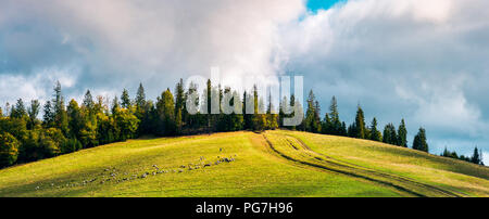 road uphill in to the forest. beautiful countryside panoramic scenery. herd of sheep grazing on the meadow. - Stock Photo