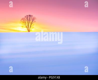 Lone Tree In Winter Sunrise - Stock Photo