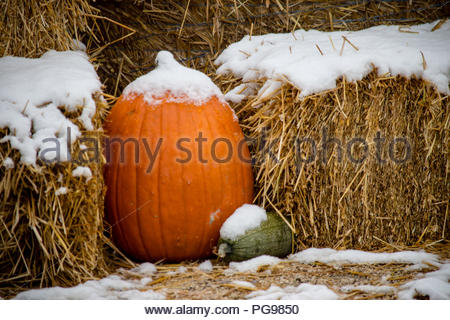 A pumpkin and bales of hay in the snow - Stock Photo