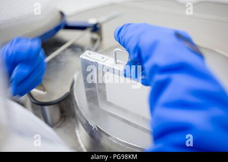 Technician storing stem cell samples in cryostorage. They have been frozen in liquid nitrogen to preserve them. Stem cells are a potential source of cells to repair damaged tissue in diseases such as Parkinson's and insulin-dependent diabetes. - Stock Photo