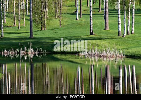 Beautiful landscape view. Birch forest reflecting on water. - Stock Photo