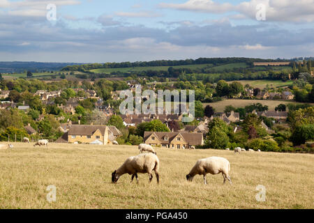 Sheep grazing summer grass above Cotswold town of Chipping Campden, Chipping Campden, Cotswolds, Gloucestershire, England, United Kingdom, Europe - Stock Photo