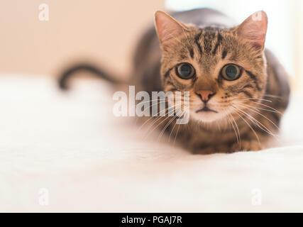 Beautiful domestic cat at home - Stock Photo